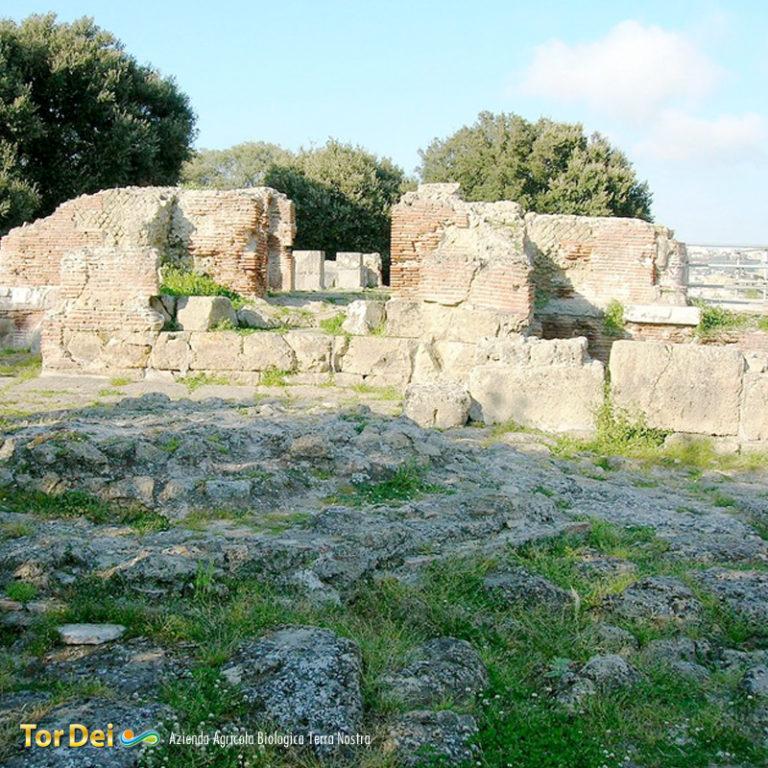 Tor Dei Azienda Agrcola Biologica Terra Nostra - Giugliano in Campania (NA)