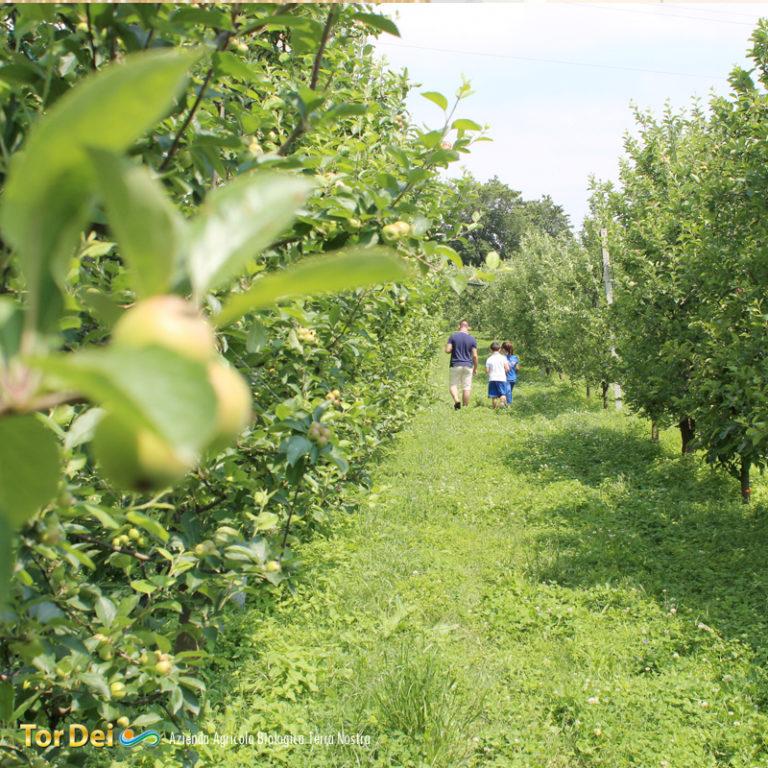 Tor Dei Azienda Agricola Biologica Terra Nostra - Giugliano in Campania (NA)