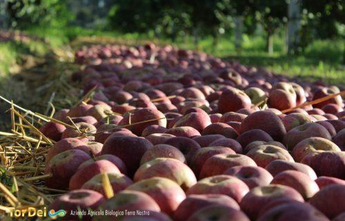 tor_dei_terra_nostra_azienda_agricola_42